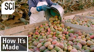 How It's Made: Cactus Pear Puree