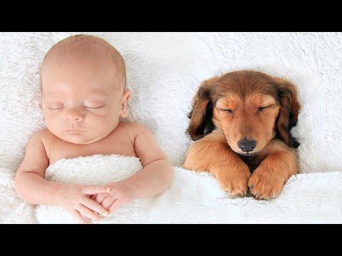 Xxx Mp4 7 Pregnant Women Saved By Animals 3gp Sex