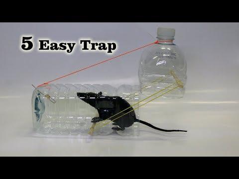 Xxx Mp4 5 Easy Mouse Rat Trap 3gp Sex
