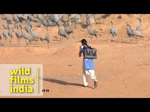 Xxx Mp4 School Girl Heads To Class Among Wild Cranes In Her Village In India 3gp Sex