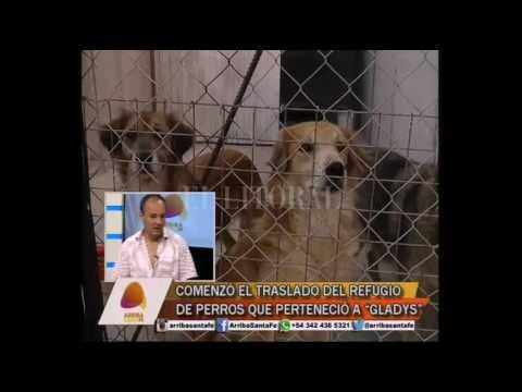 Gabriel Piedrabuena - Dignidad animal