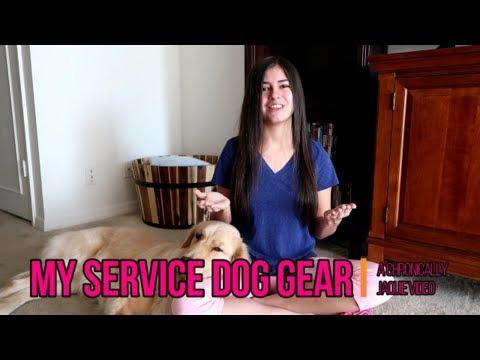 Xxx Mp4 My Service Dog Gear Haul 🐕 3gp Sex