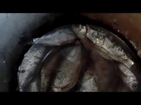 Засолка тарани в домашних условиях