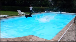 Dogs Jumping In The Pool Compilation 2015 [SP]