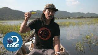 How to Choose Your Fishing Lure? | Bangkok Hooker