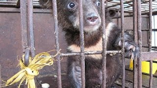 ANIMALS ABUSED BY TRADITIONAL MEDICINE! 5 Weird Animal Facts
