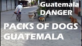 Dogs Running in Packs Attacking Tourists in Guatemala