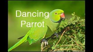 Tiya Tiya Tiya Bengali song || Dancing Parrot ||