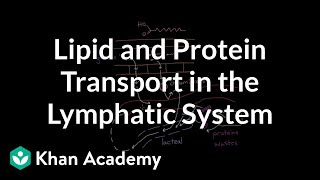 Lipid and protein transport in the lymphatic system | NCLEX-RN | Khan Academy