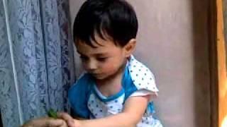 kashmiri baby eating kashmiri hot chillies - UNBELIEVABLE VIDEO