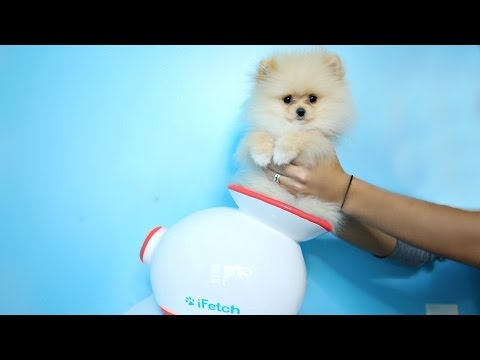 Testing Out Weird Dog Gadgets With NEW PUPPY