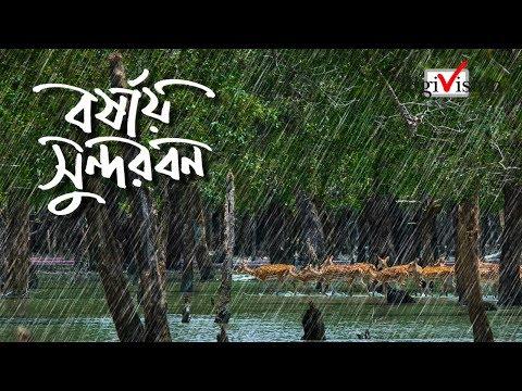 Xxx Mp4 বর্ষায় সুন্দরবন Sundarban In The Rainy Season 3gp Sex