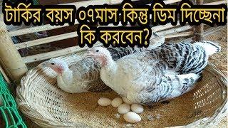 টার্কি পূর্ণবয়ষ্ক হওয়ার পরও ডিম দেয়না কেন । Why Turkey Bird are not lays egg ।  টার্কি পালন গাইডলাইন