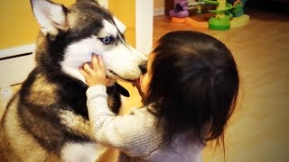 Dogs and Babies 👶🐶 Funny Dogs Loves Babies (Full) [Funny Pets]