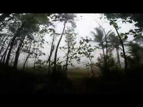 Туры в Индию. Джунгли. Kerala, morning in village, India, Jungle, Wayand wildlife sanctuary