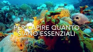 Oceani - Sandro Carniel