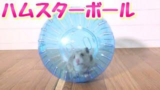 ハムスター専用のお散歩ボール!!