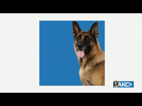 2018 AKC Royal Canin National All Breed Puppy and Junior Stakes