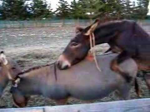 donkeys ;