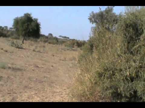partridge hunting in sindh 22 jan 2012
