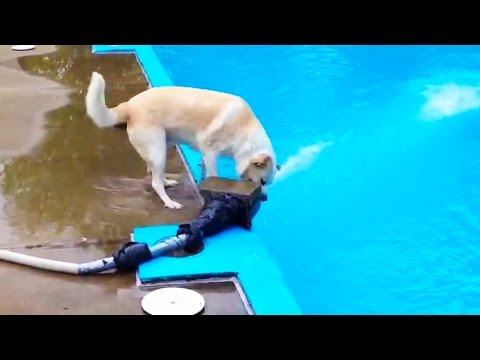 DOGS LOGIC 🐶 Funny Dogs Video [Funny Pets]
