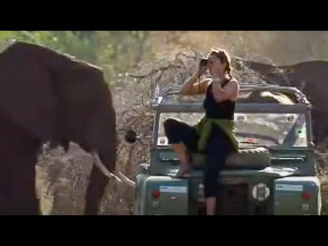 In search of Virgo the elephant - endangered animals - BBC wildlife