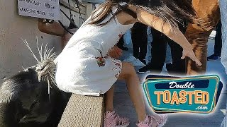 VIDEO OF SEA LION DRAGGING A GIRL INTO THE WATER GOES VIRAL - Double Toasted Highlight