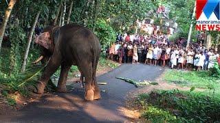 Elephant runs amok, kills two mahouts in Kottayam   Manorama News