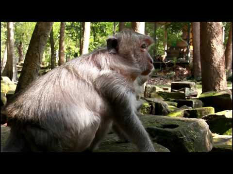 Xxx Mp4 Big Baby Monkey Lose His Mother Nature Daily ST 252 3gp Sex