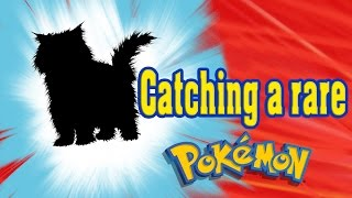 Pokemon Go - Catching a REAL Persian 😂 - Two Stupid Cats Shorts #5 - Funny cat video