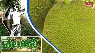 Farmer Get Profits On Panasa Cultivation In Visakha Vanyam | Nela Talli Special Focus  | HMTV
