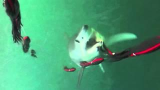 EPIC Mako Shark Attack off Nantucket and Cape Cod
