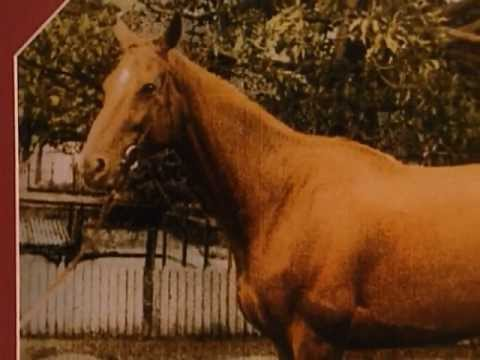 Animal X Classic : The Goatman, Phar Lap & Psychic Animals 1