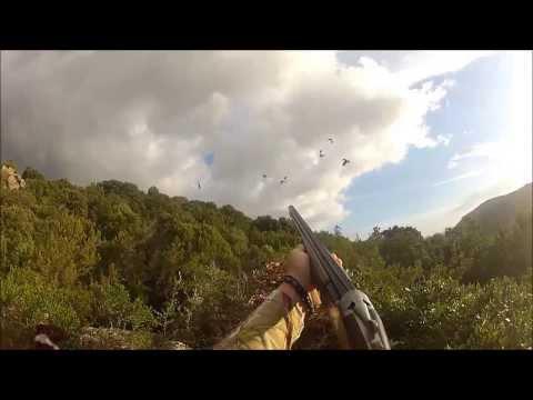 N°10 Chasse aux pigeons de migration en Corse du Sud 2013 2014