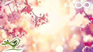 9 Hours of Relaxing Sleep Music: Soft Piano Music, Sleeping Music, Fall Asleep Fast ★98
