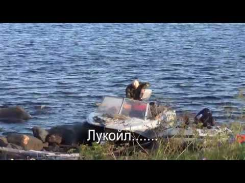 видео отчеты по белому морю