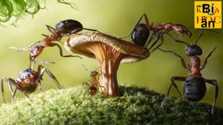 Giải Đáp Khoa Học - Những điều chưa biết về loài kiến