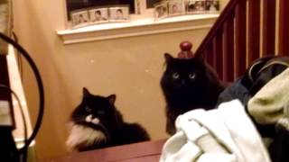 Kitty Compilation 2