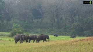 Periyar Tiger Reserve - HD - Thekkady - A must see destination of Kerala