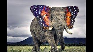 أغرب 10 حيوانات فى العالم لن تصدق أنهم موجودين حقا .. !!