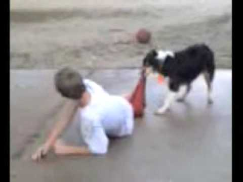 dog vs boy in basketball pants lose