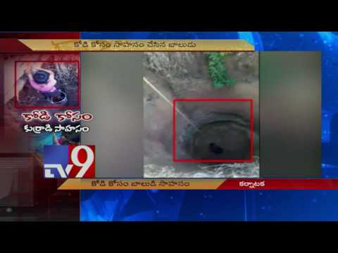 Boy risks life to rescue Hen ! - TV9