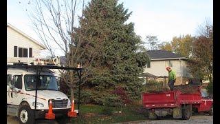 Moving Giant Christmas Tree!