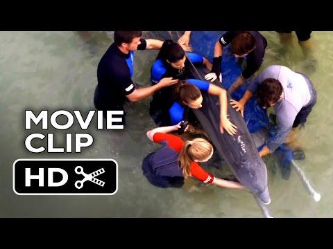 Xxx Mp4 Dolphin Tale 2 Movie CLIP We Re Good Here Kyle 2014 Morgan Freeman Dolphin Drama HD 3gp Sex