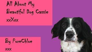 All About My Beautiful Dog Cassie xxXxx