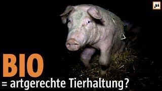 BIO = artgerechte Tierhaltung? // Animal Rights Watch