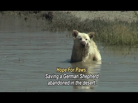 Xxx Mp4 Hope For Paws Saving A German Shepherd Abandoned In The Desert Please Share This Unusual Rescue 3gp Sex