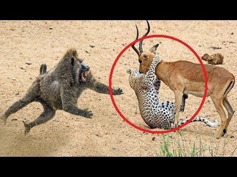 Hayvanların Hayatını Kurtaran 5 Hayvan