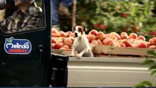 Mela Melinda Evelina spot 2015