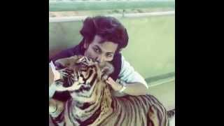 Ajmal Khan Thrissur  feeding a Tiger